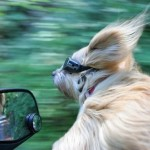 Pictures of Dog's Out Car Windows