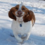 10 Hilarious Pictures of Basset Hounds Running [Pics]
