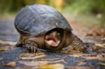 funny-turtle-face