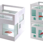 The Stylish and Modern Umbra FishHotel