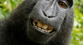 Monkey Hijacks Camera and Snaps Self Portraits