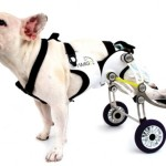 Functional Design – Wheelchair for Dogs x Nir Shalom