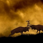 50 Incredible Examples of 'Best Shot' Wildlife Photography