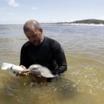 Baby Dolphin Rescued – Cute Picture Gallery