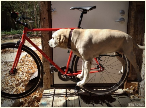 Limewedge Net Fairdale Dograck Attache Your Dog To Your Bike