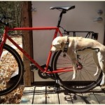 Fairdale Dograck – Attache Your Dog to Your Bike