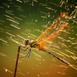 National Geographic's 2011 Photo Contest [Gallery]