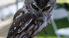 A Collection of Creepy Owl Pics