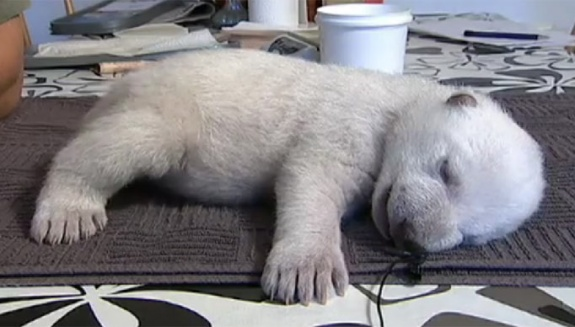 Siku Baby Polar Bear (4)