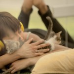 Kitten Therapy: The Prescription for Stress