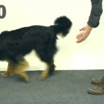 Magician Shows Magic to Dogs Funny [Video]