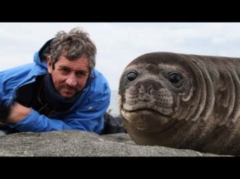 Photographer Takes Close-up of Baby Seal – What's Next is Incredible