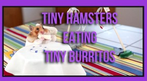 Tiny Hamsters Eating Tiny Burritos – Why Watching This Will Make Your Day