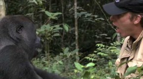 What Happens When a Gorilla is Reunited With the Man Who Raised Him